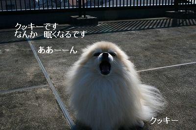 s-IMG_0588.jpg