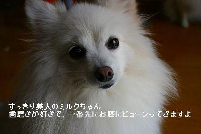 s-IMG_0747_20111015223210.jpg