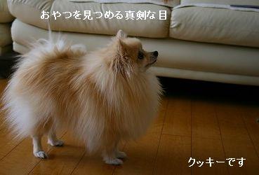 s-IMG_0800_20111020002549.jpg