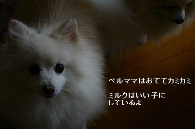s-IMG_0884.jpg