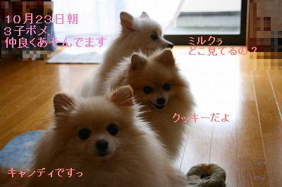 s-IMG_0903_20111023234541.jpg