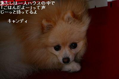 s-IMG_1021.jpg