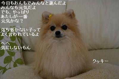 s-IMG_1168.jpg