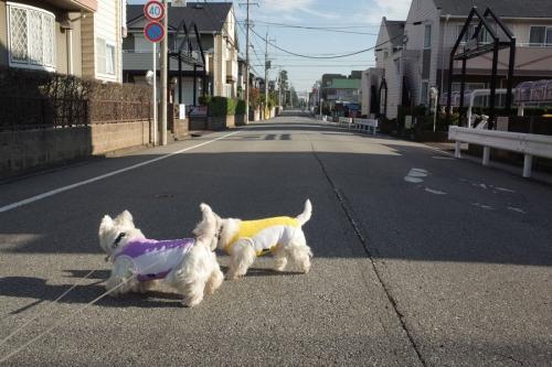mecchakimochinoyoiasadaga1.jpg