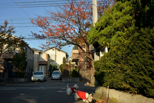 sakuranokouyou1.jpg