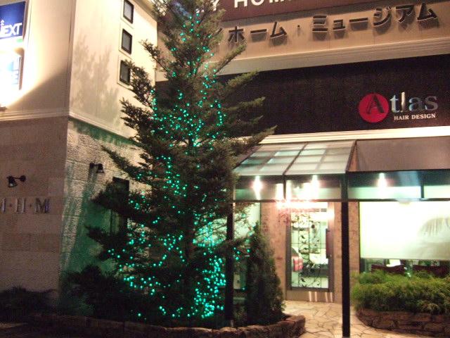 お店の前のツリー♪