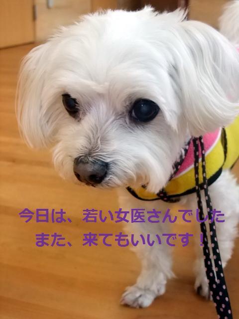 2010_03070001.jpg