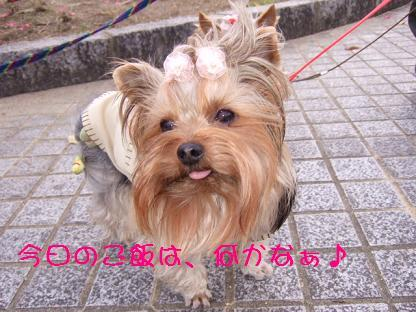 2007_0104no10021.jpg
