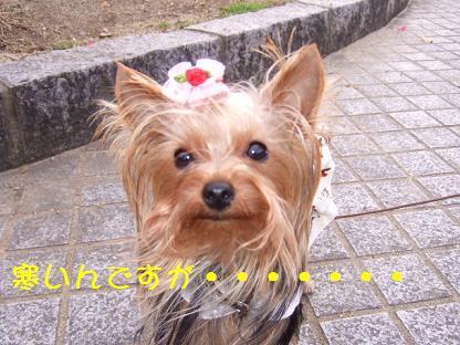 2007_0104no10023.jpg