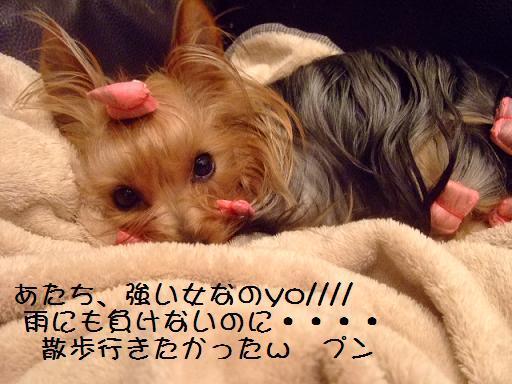 2007_0418no10007.jpg