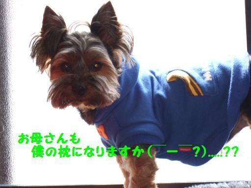2008_0414no10008.jpg