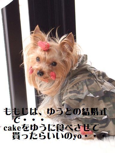 2008_0205no10006.jpg