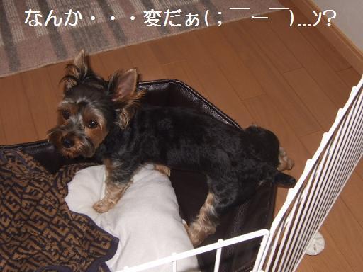 2007_0903no10016.jpg