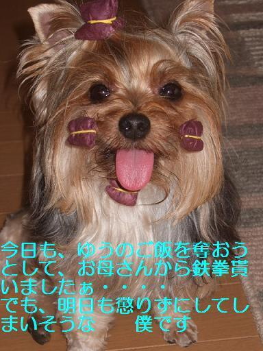 2007_0903no10004.jpg