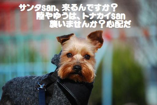 DSC_0060_20081220214122.jpg