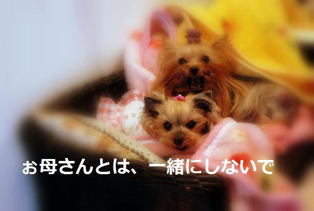 DSC_0007_20100107165606.jpg