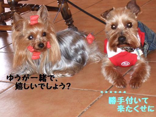 2008_0412no10064.jpg