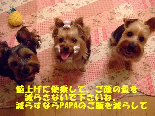 2007_0919no10039.jpg