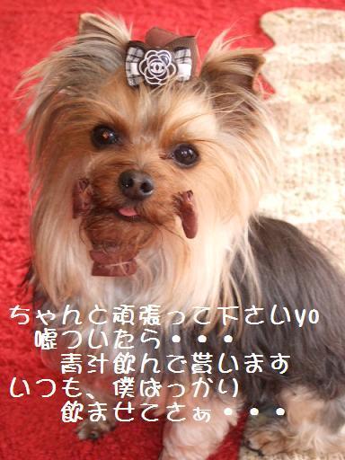 2008_0330no10014.jpg