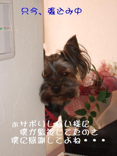 2008_0330no10030.jpg