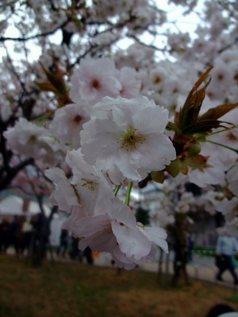 2010_04150057.jpg