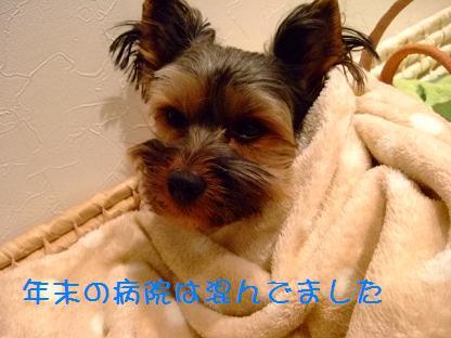2006_1230no10005.jpg