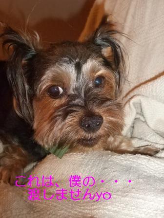 2008_0915no10033.jpg