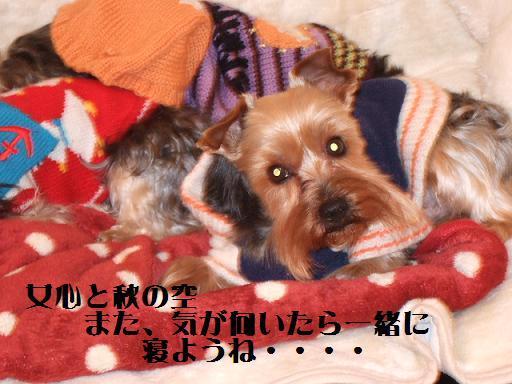 2008_0123no10007.jpg