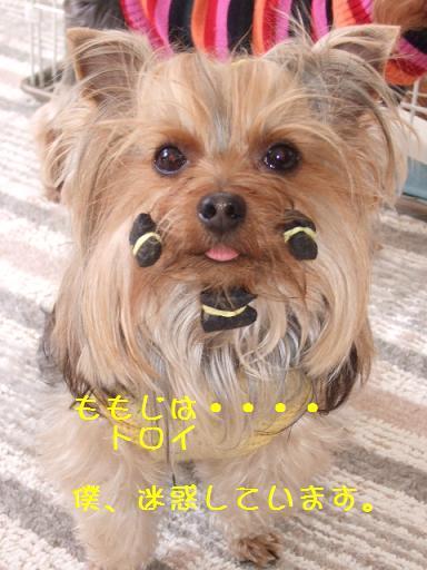 2008_0117no10011.jpg