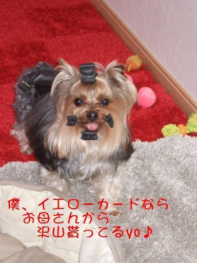 2008_0309no10003.jpg