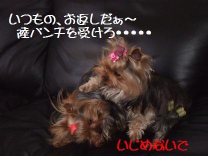 2007_0226no10007.jpg