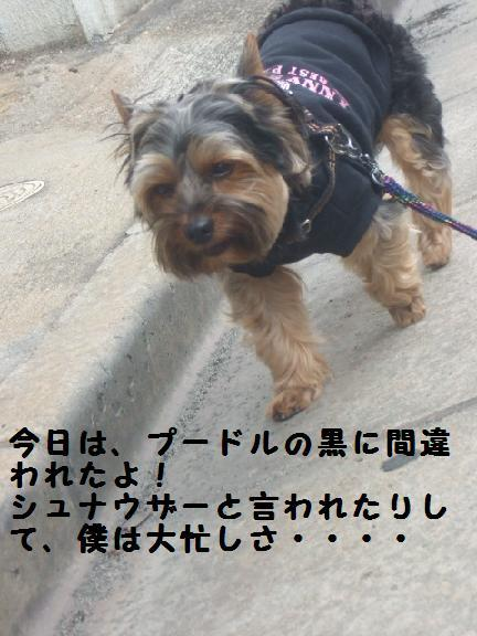 2007_0603no10022.jpg