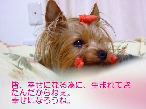2007_0406no10002.jpg