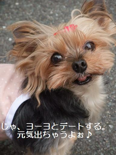 2008_1006no100331.jpg