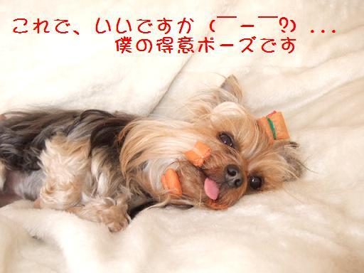 2008_0407no10028.jpg