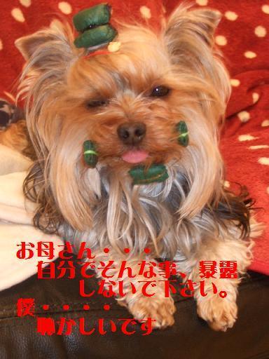 2008_0212no10004.jpg