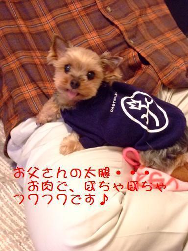 2008_0115no10002.jpg