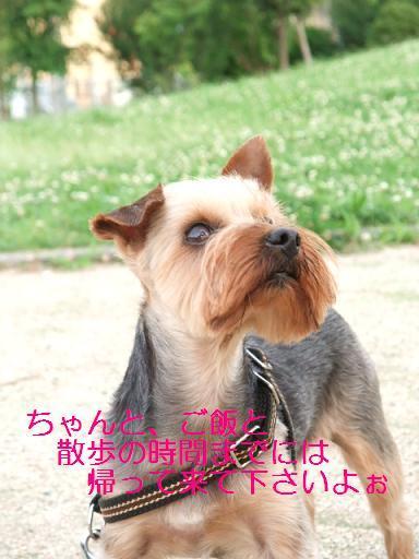 2008_0624no10022.jpg