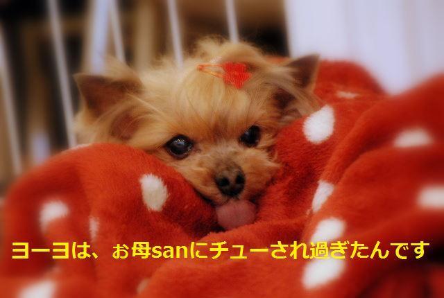 DSC_201010300031.jpg