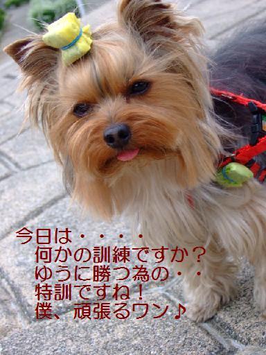 2007_0331no10009.jpg