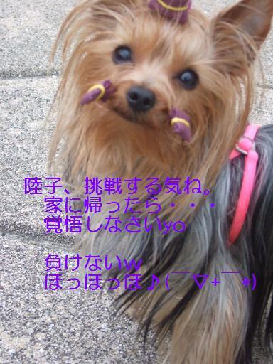 2007_0331no10011.jpg