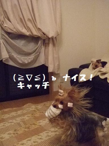 2007_1012no10034.jpg