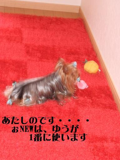 2008_0301no10029.jpg