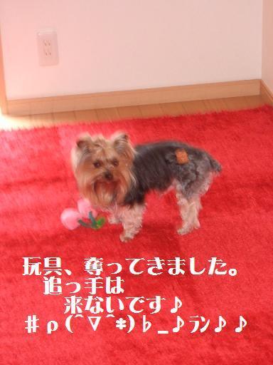 2008_0301no10030.jpg