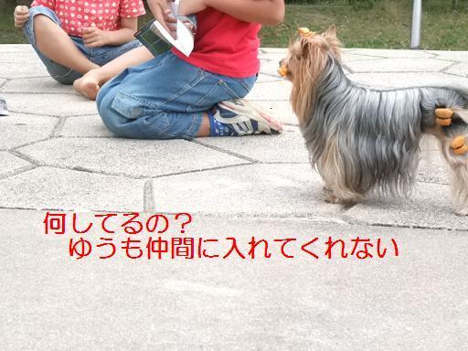 2008_0616no10002.jpg