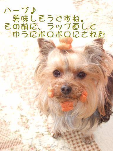 2008_0304no10033.jpg
