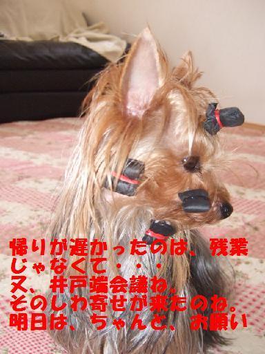 2007_1017no10023.jpg