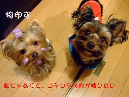 2007_0119no10044.jpg