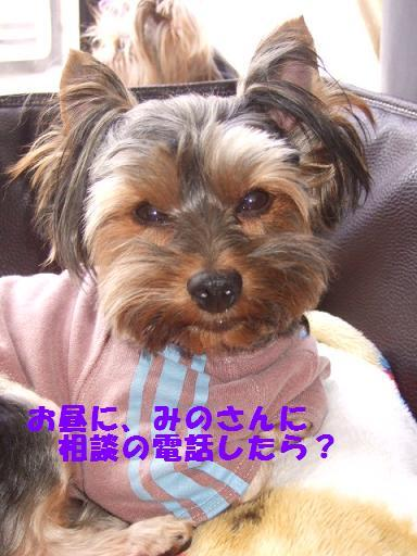 2007_1018no10017.jpg