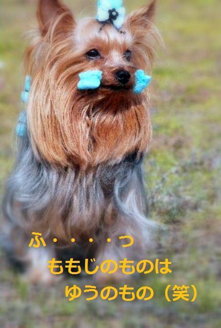 DSC_0005_20100120213346.jpg